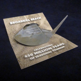 Horseshoe Crab Pop-Up
